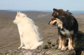 Arvi ja Dolla Sokostin huipulla