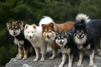 Dolla, Arvi, Pessi, Unna ja Uula