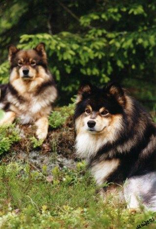 Iina ja Juri vuonna 2001