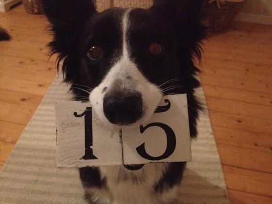 Nyyti toivottaa kaikille onnellista vuotta 2015!