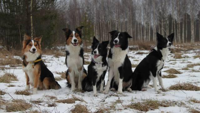 """Nyyti ja """"isot nyytit"""" eli vasemmalta Finn, Jay, Nyyti, Neo ja Draama. Kuva: Anna-Leena Väätänen"""