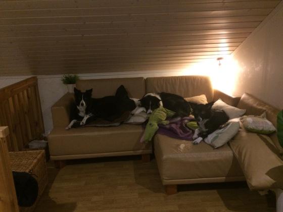 Kolmen bc:n kopla asettumassa yöunille